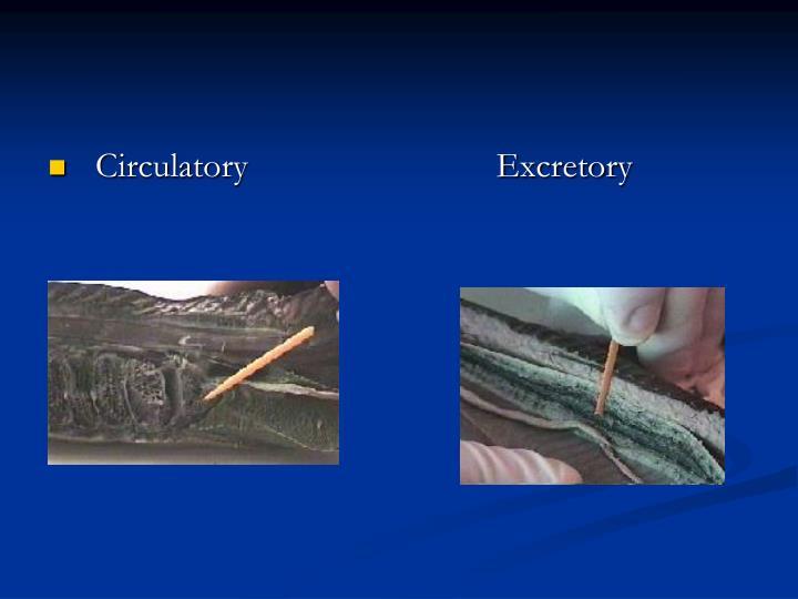 Circulatory                            Excretory