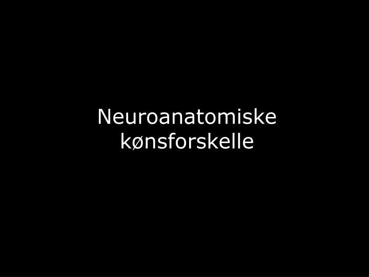 Neuroanatomiske