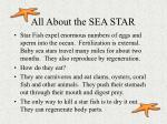 all about the sea star