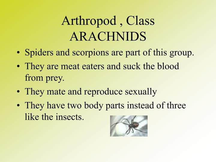 Arthropod , Class