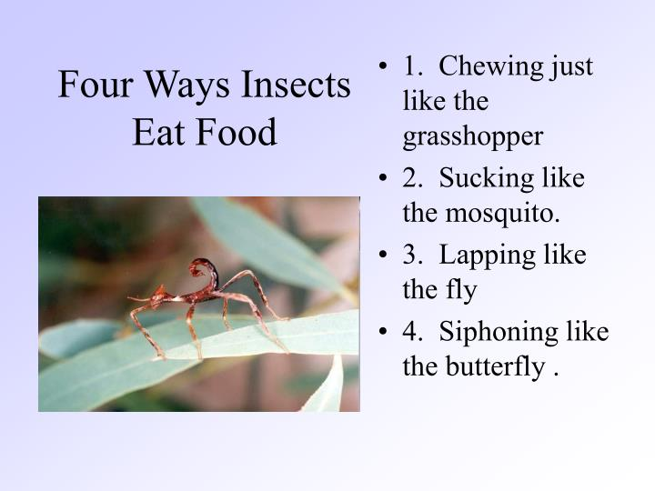 Four Ways Insects Eat Food