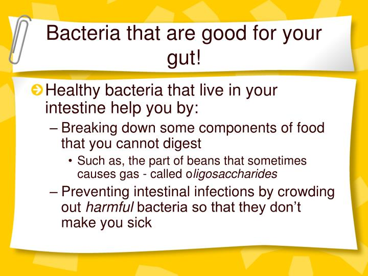 Bacteria that are good for your gut!