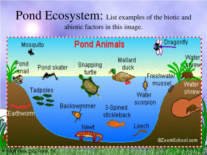 Pond Ecosystem: