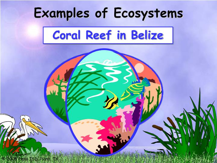 Examples of Ecosystems