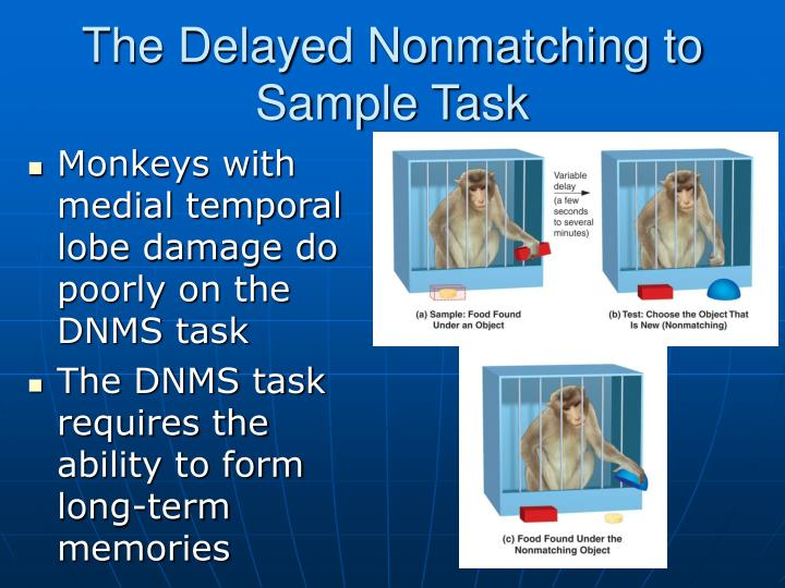 The Delayed Nonmatching to Sample Task