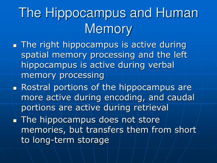 The Hippocampus and Human Memory