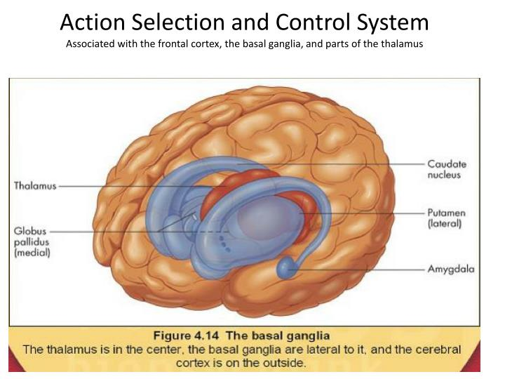 Action Selection and Control System