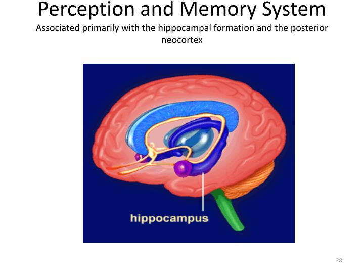 Perception and Memory System