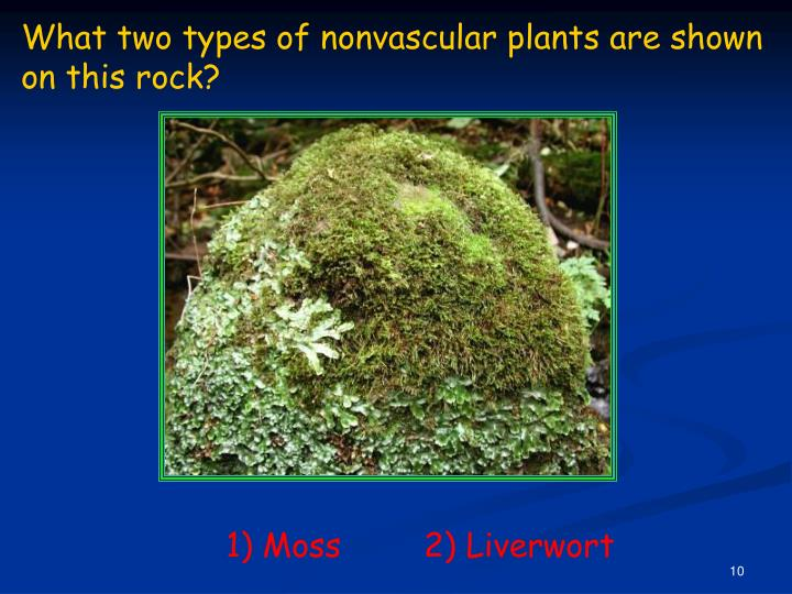 What two types of nonvascular plants are shown on this rock?