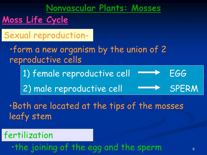 1) female reproductive cell
