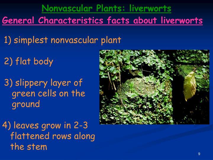 Nonvascular Plants: liverworts