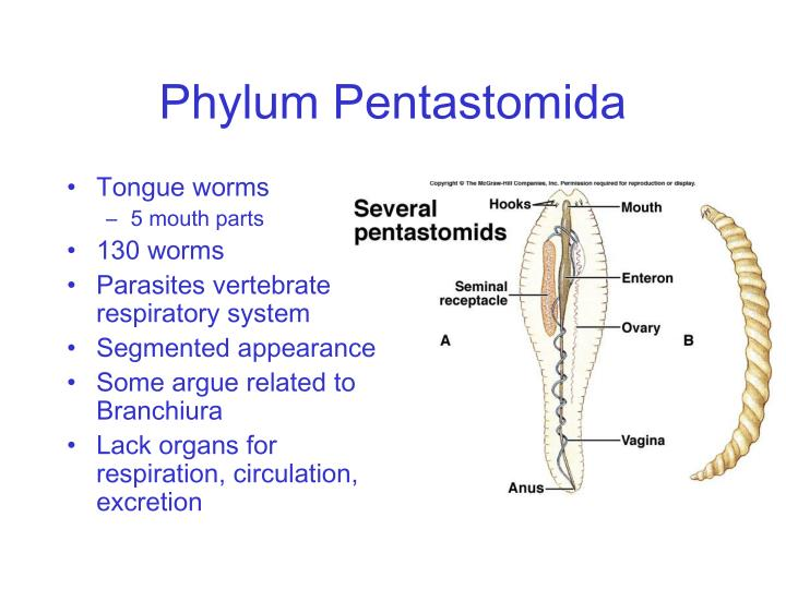 What does Pentastomida mean definition and meaning Free