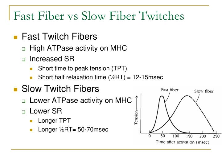 Fast Fiber vs Slow Fiber Twitches