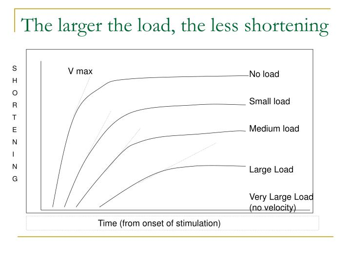 The larger the load, the less shortening