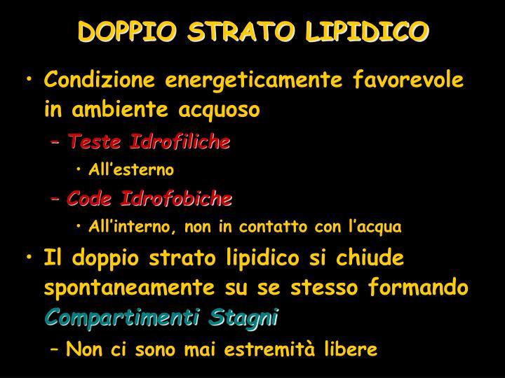 DOPPIO STRATO LIPIDICO