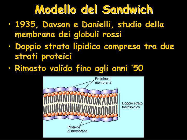 Modello del Sandwich