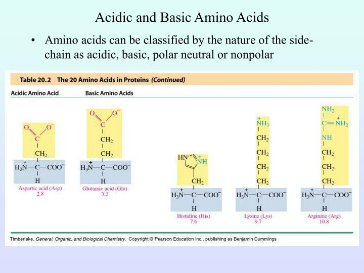 Acidic and Basic Amino Acids