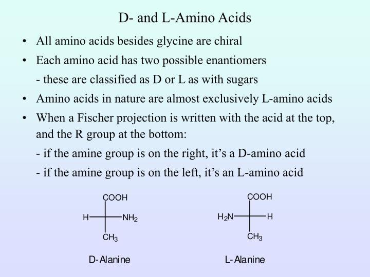 D- and L-Amino Acids