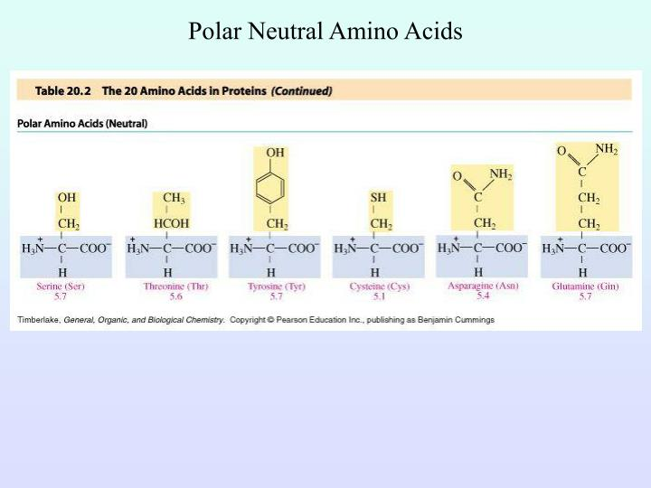 Polar Neutral Amino Acids