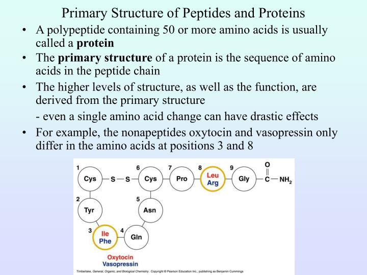 Primary Structure of Peptides and Proteins