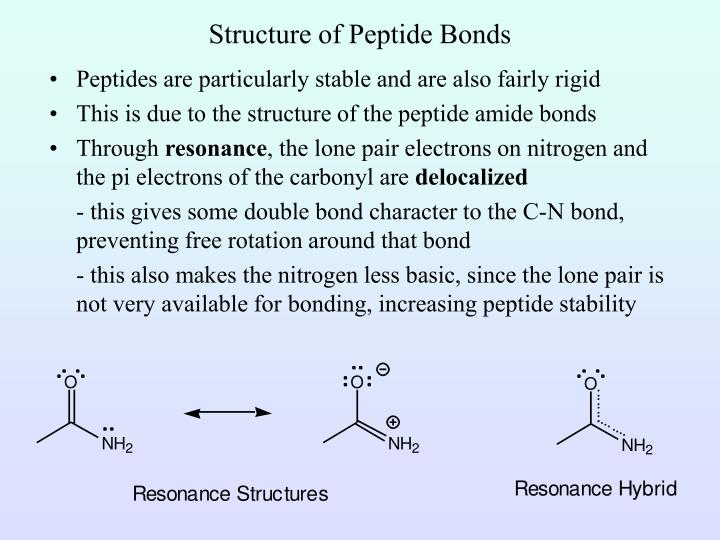 Structure of Peptide Bonds