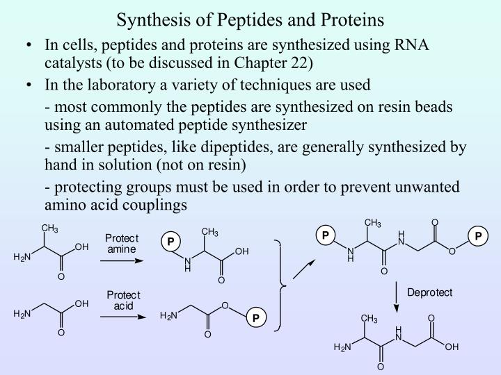 Synthesis of Peptides and Proteins