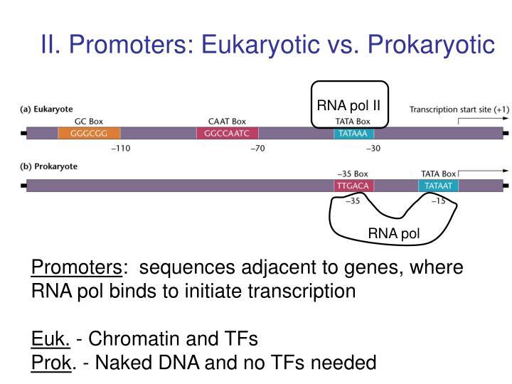 II. Promoters: Eukaryotic vs. Prokaryotic