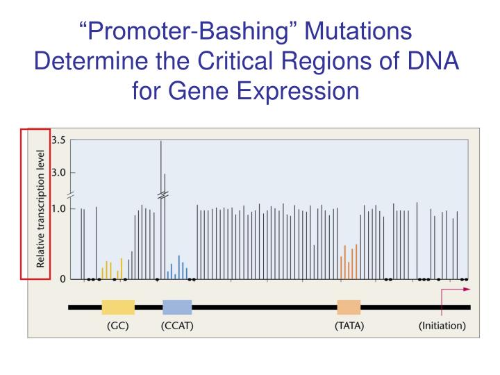 """Promoter-Bashing"" Mutations Determine the Critical Regions of DNA for Gene Expression"