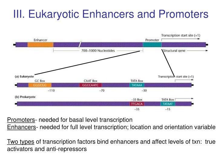 III. Eukaryotic Enhancers and Promoters