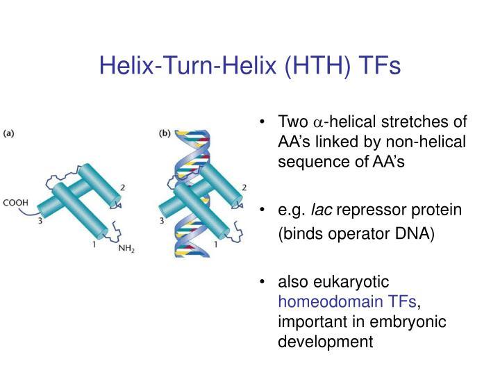 Helix-Turn-Helix (HTH) TFs