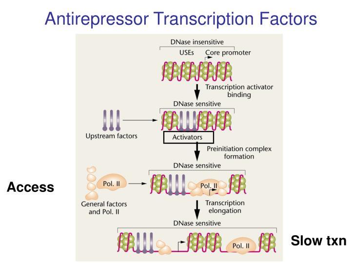 Antirepressor Transcription Factors