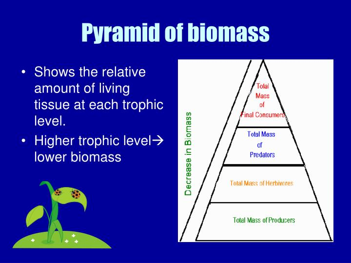PPT - Chapter 3 Topic 4: Trophic levels and Ecological ...