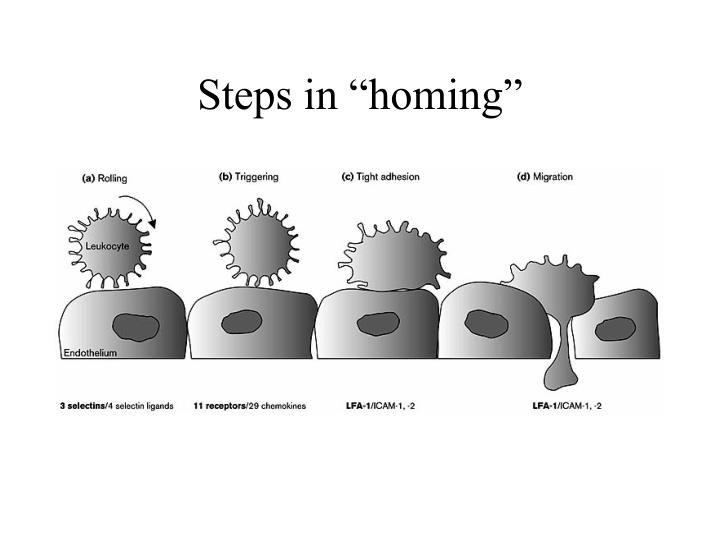 "Steps in ""homing"""