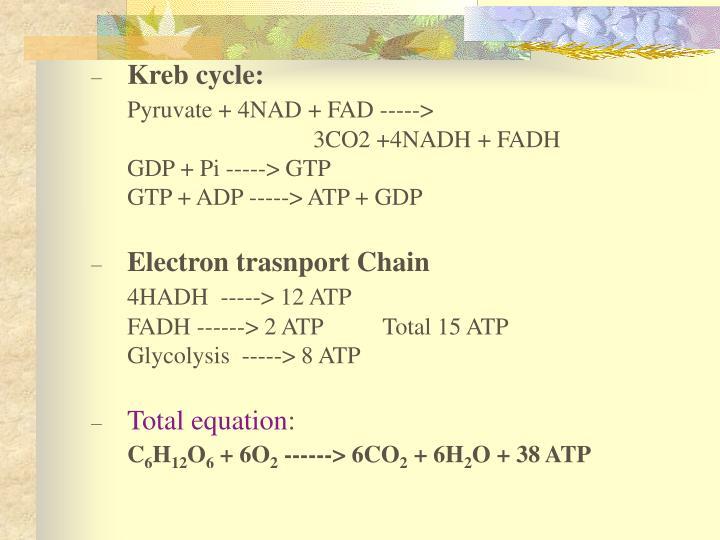 Kreb cycle:
