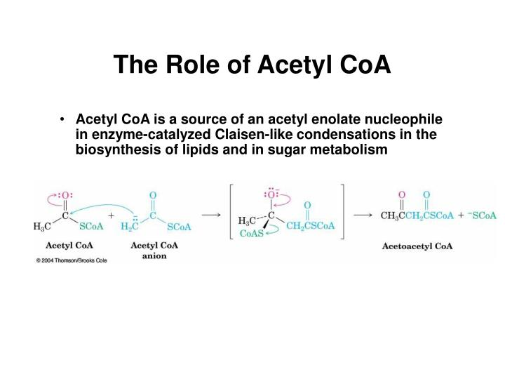 The Role of Acetyl CoA