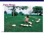 fairy rings