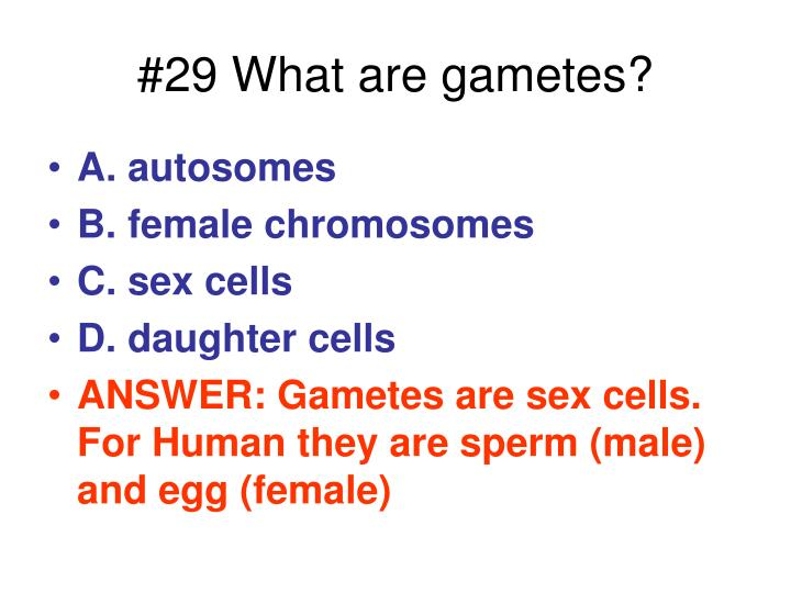 #29 What are gametes?