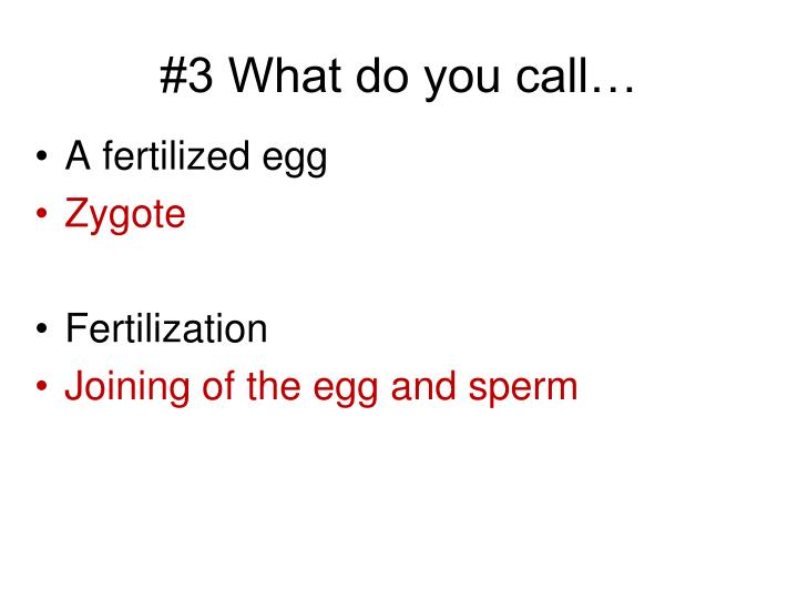 #3 What do you call…