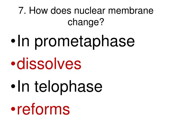 7. How does nuclear membrane change?