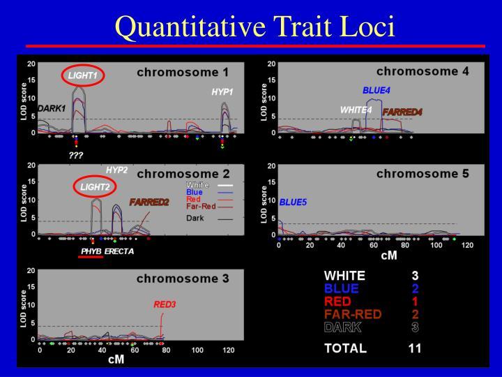 Quantitative Trait Loci