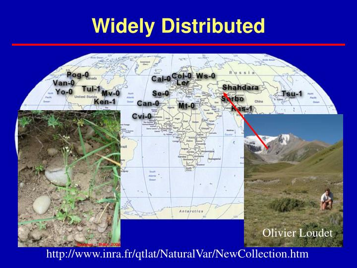 Widely Distributed