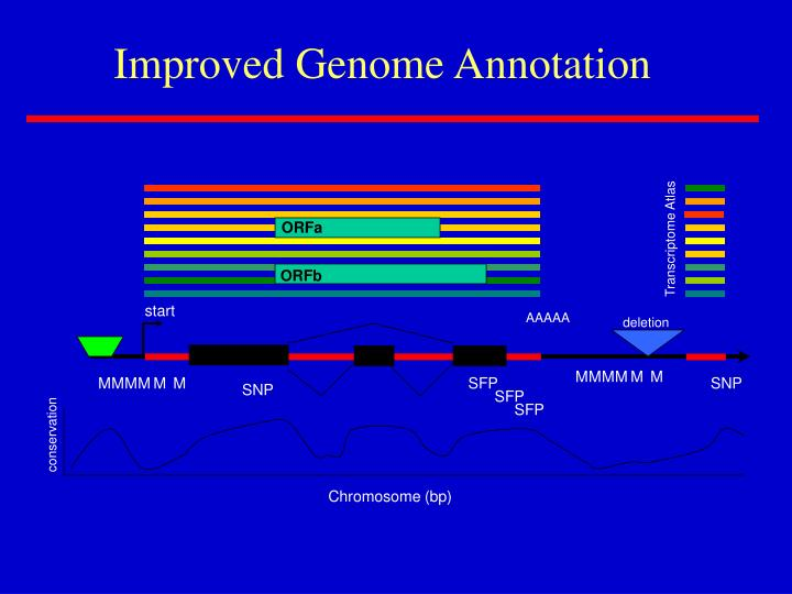 Improved Genome Annotation