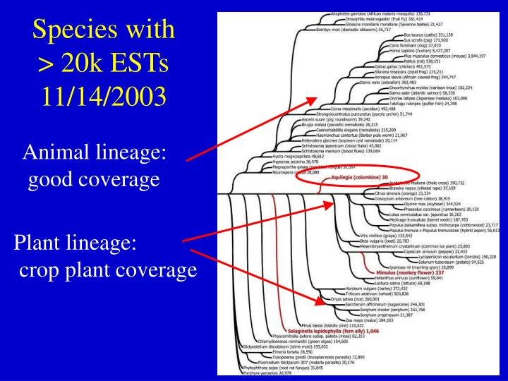 Plant lineage: