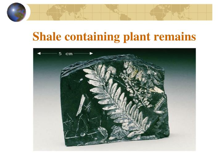 Shale containing plant remains