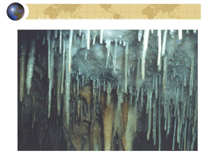 Stalactites hanging (tight) to the ceiling of a cave.