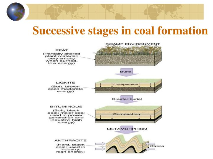 Successive stages in coal formation
