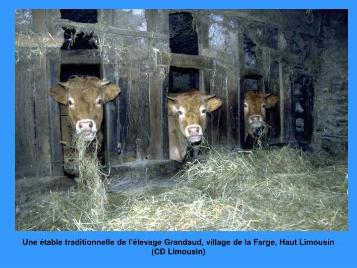 Une étable traditionnelle de l'élevage Grandaud, village de la Farge, Haut Limousin (CD Limousin)