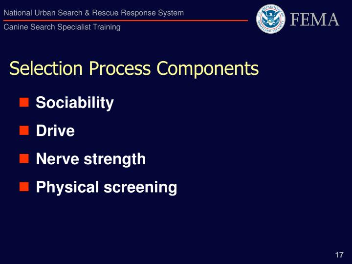 Selection Process Components
