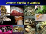 common reptiles in captivity