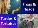 frogs toads